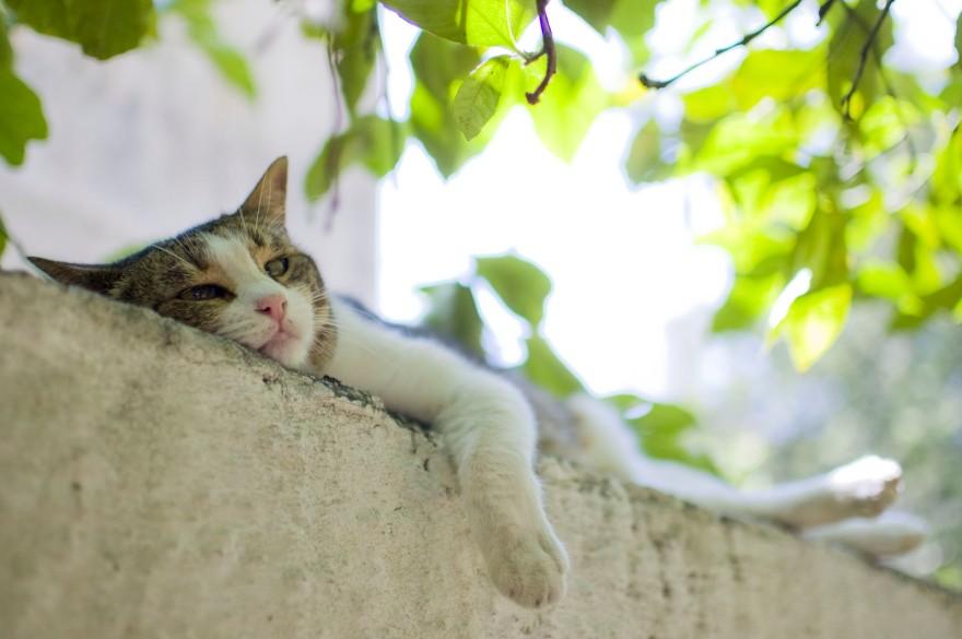 Cats Sharon Espo Photo