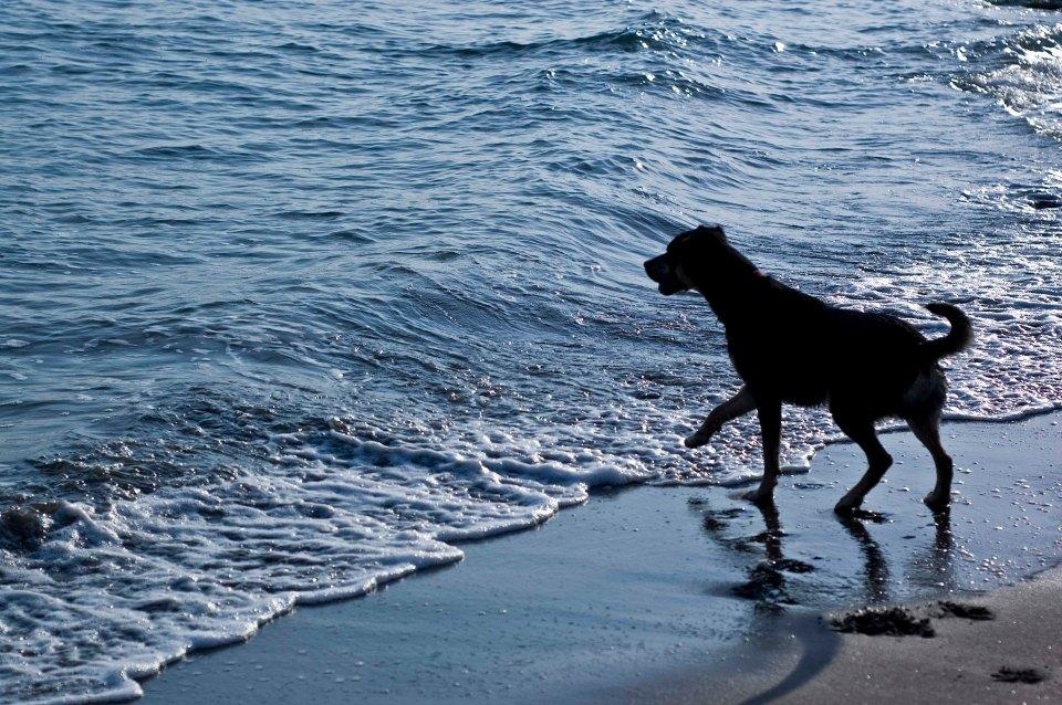 Dogs Sharon Espo Photo