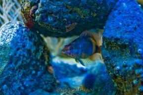 Fishes Sharon Espo Photo